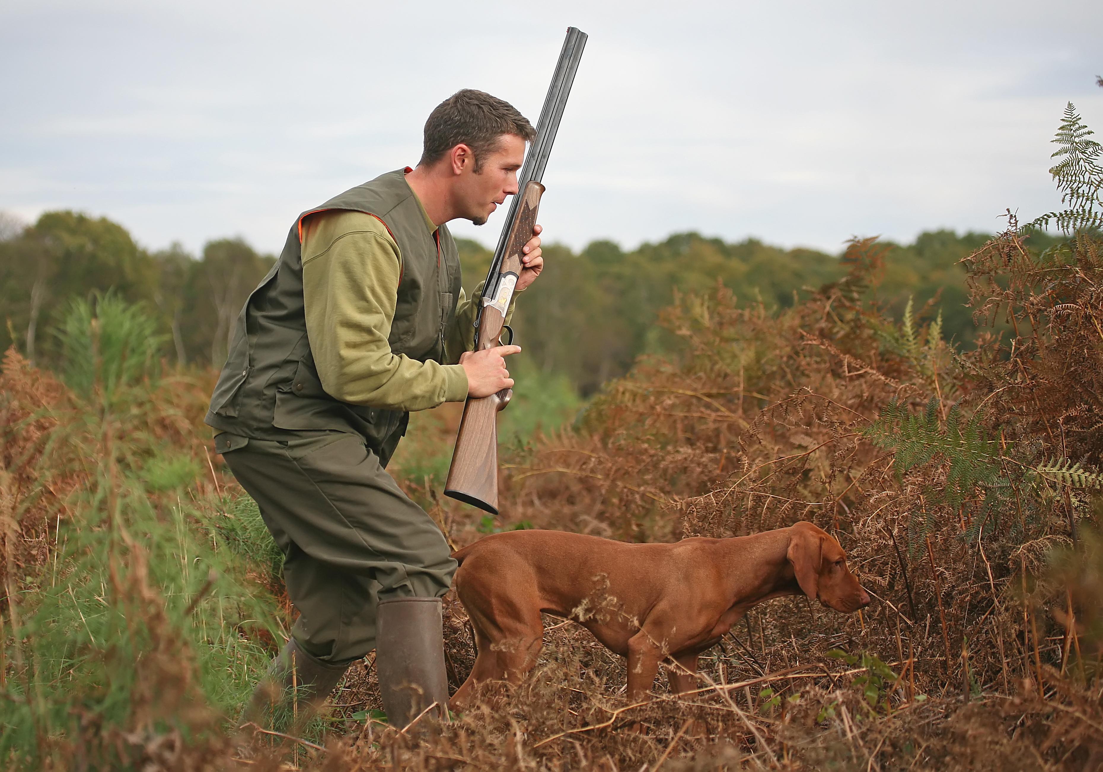 Chasseur et son chien à l'arrêt un braque hongrois